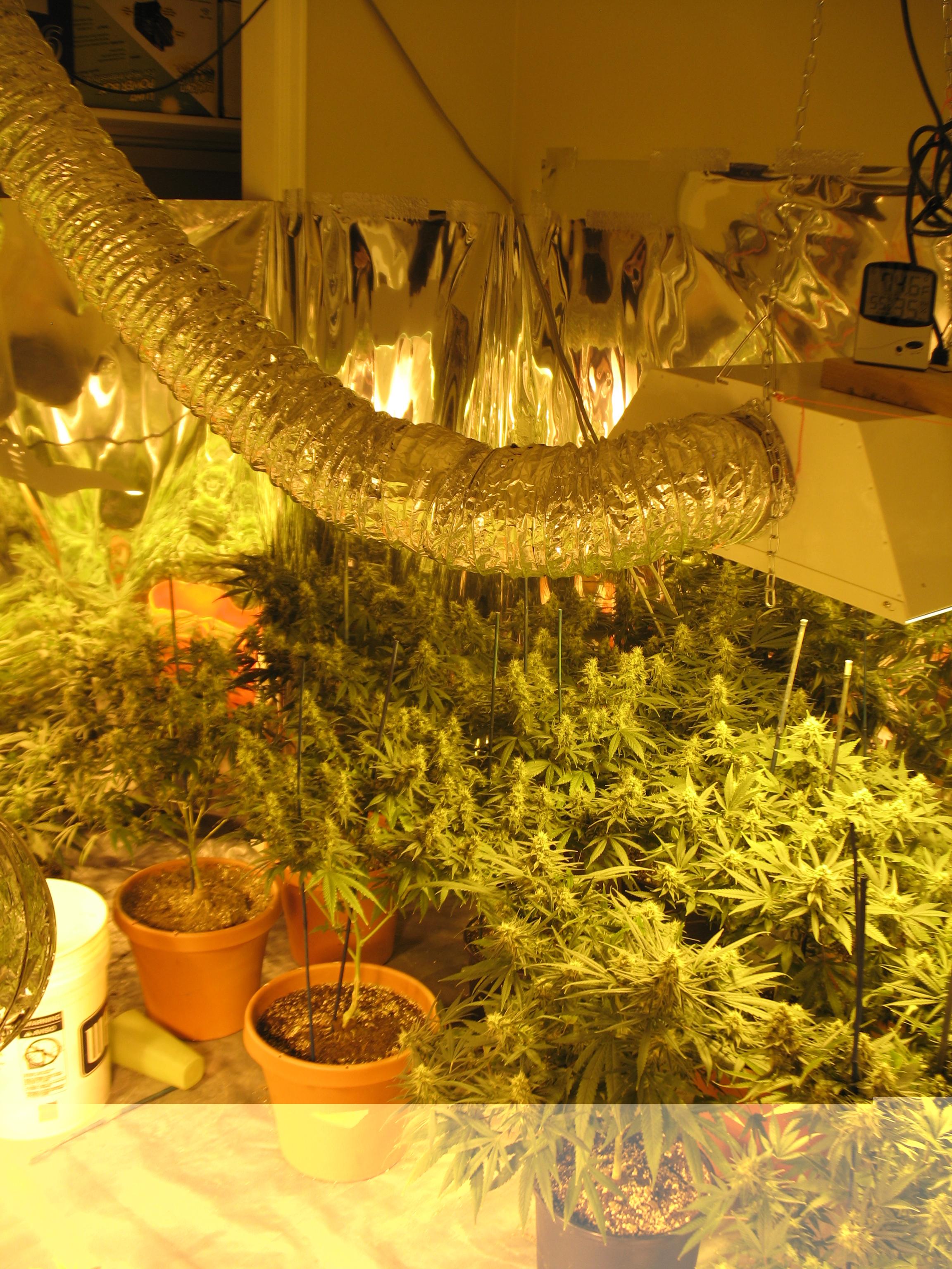 Legal Marijuana Grows Growing A Problem